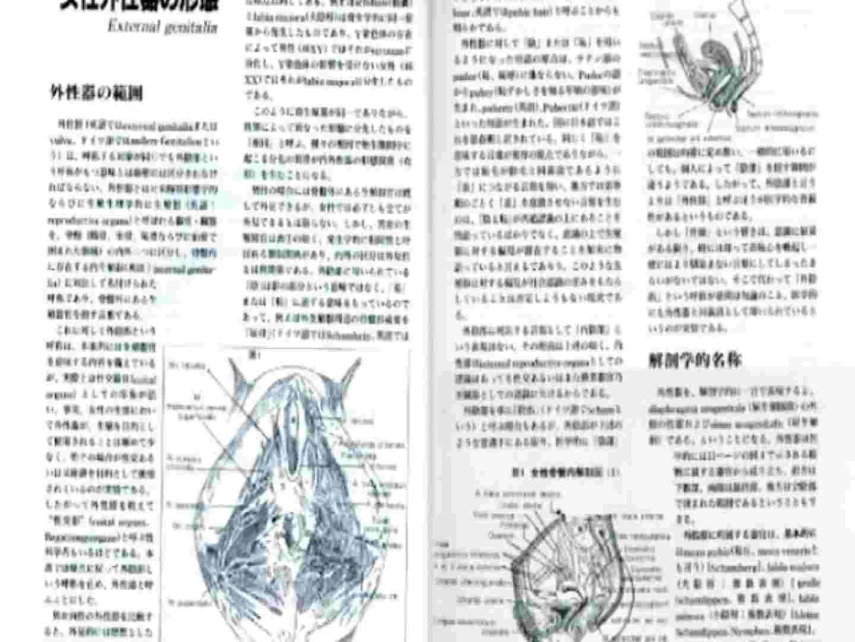 日本女性の外性器① 性器   0  70画像 15