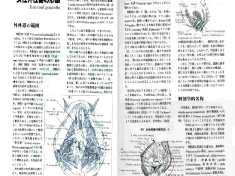 日本女性の外性器① 性器   0  70画像 23