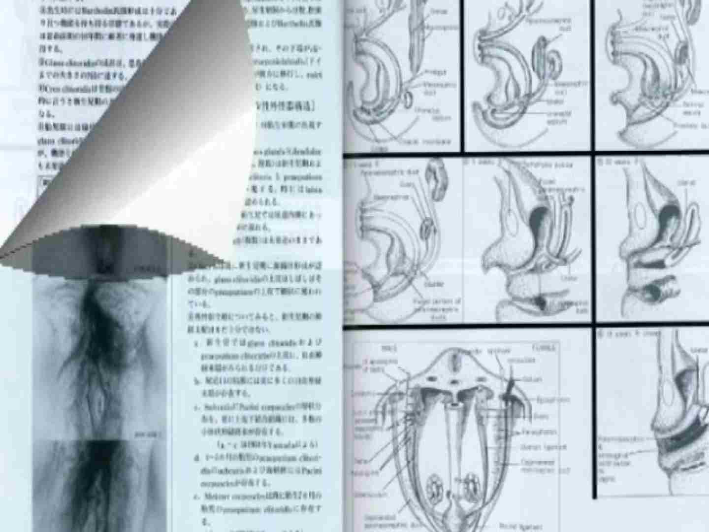 日本女性の外性器① 性器   0  70画像 33