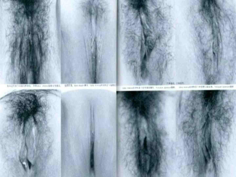 日本女性の外性器① 性器   0  70画像 37